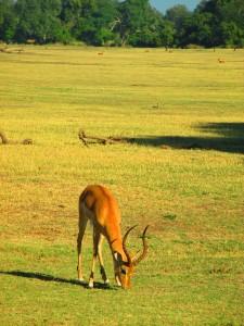 Impala for web